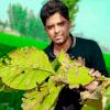 Manas Rajput