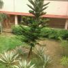 Priti nayak  Student who like study teacher friends and whole world