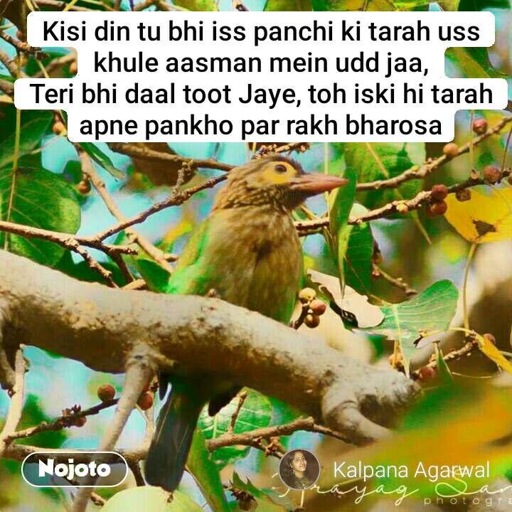 Kisi din tu bhi iss panchi ki tarah uss khule aasman mein udd jaa, Teri bhi daal toot Jaye, toh iski hi tarah apne pankho par rakh bharosa #NojotoQuote