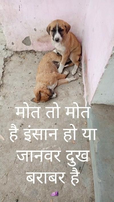 मोत तो मोत है इंसान हो या जानवर दुख बराबर है