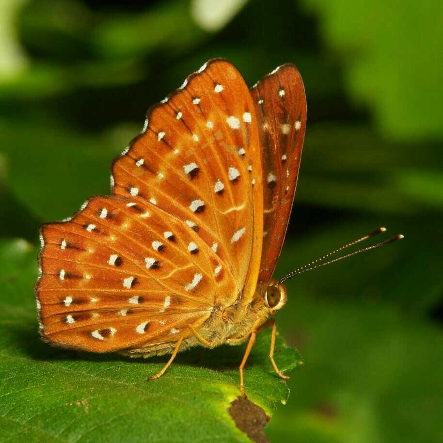तितली तितली;हस्ताक्षर है एहसास का।एहसास के हस्ताक्षर नहीं मिल पाते हैं आसानी से।मिल जाये तो उभरते नही हैं।आइये हम सभी उस हस्ताक्षर को महसूस करते हैं अपने-अपने रंग में।।