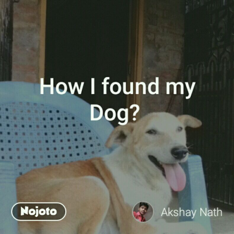How I found my Dog?