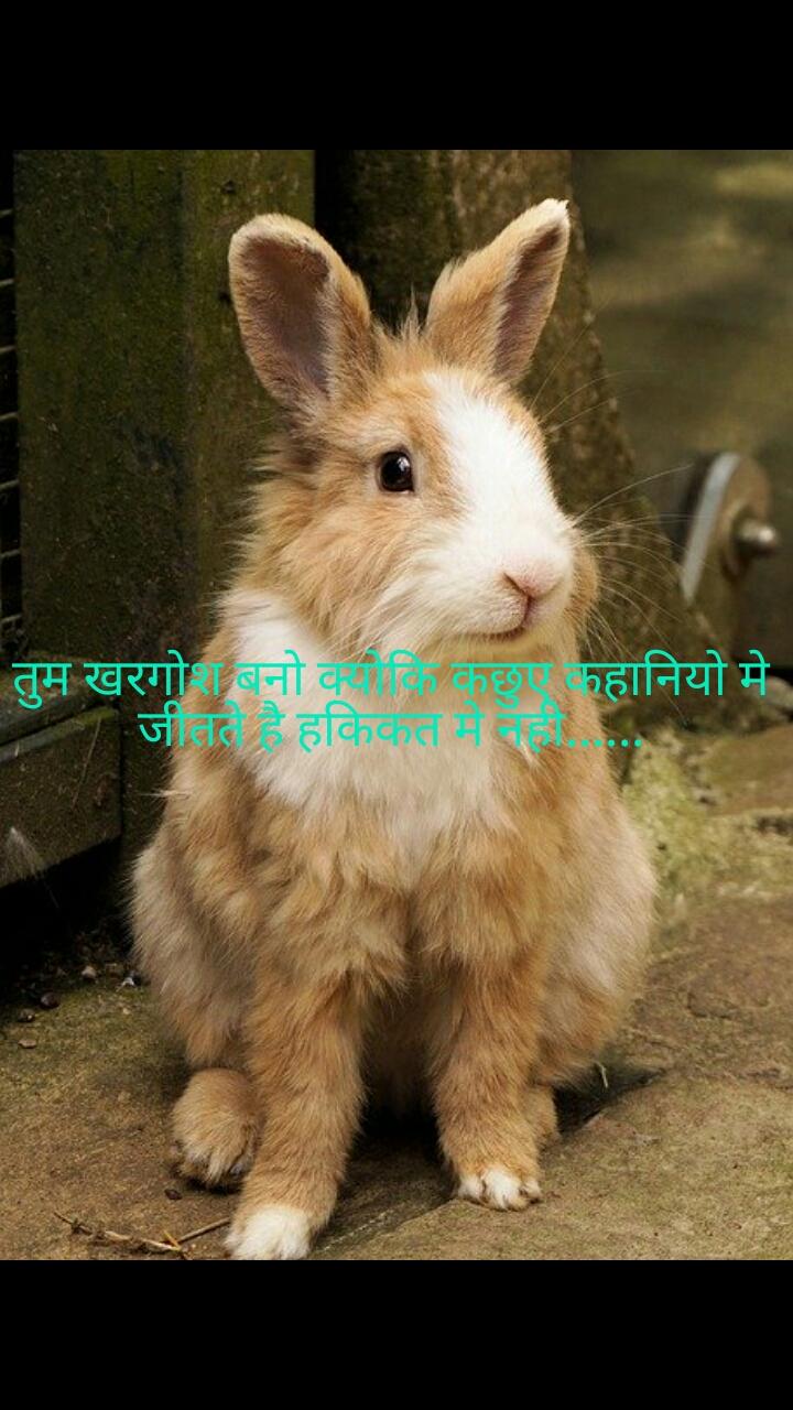 तुम खरगोश बनो क्योकि कछुए कहानियो मे जीतते है हकिकत मे नही......