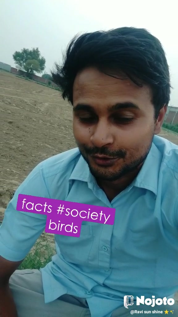 facts #society birds