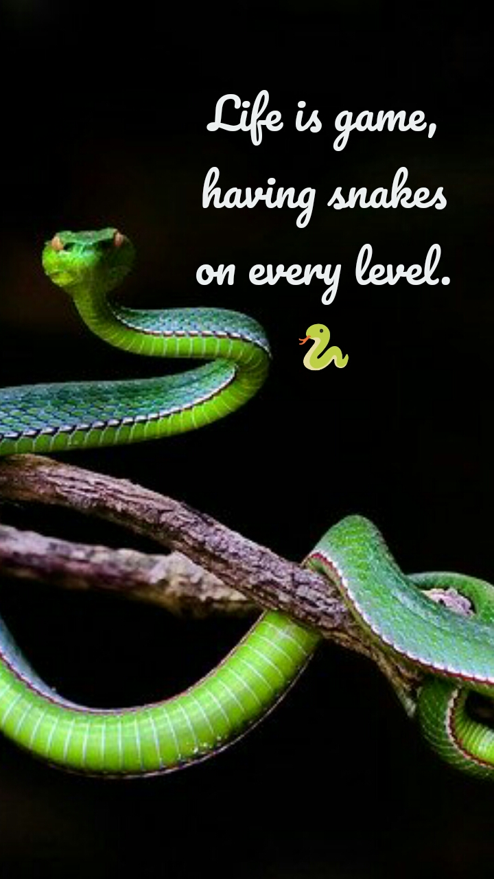 Life is game, having snakes on every level. 🐍