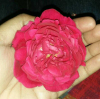 Shayaraa https://www.instagram.com/aanchal_mishra_6897/