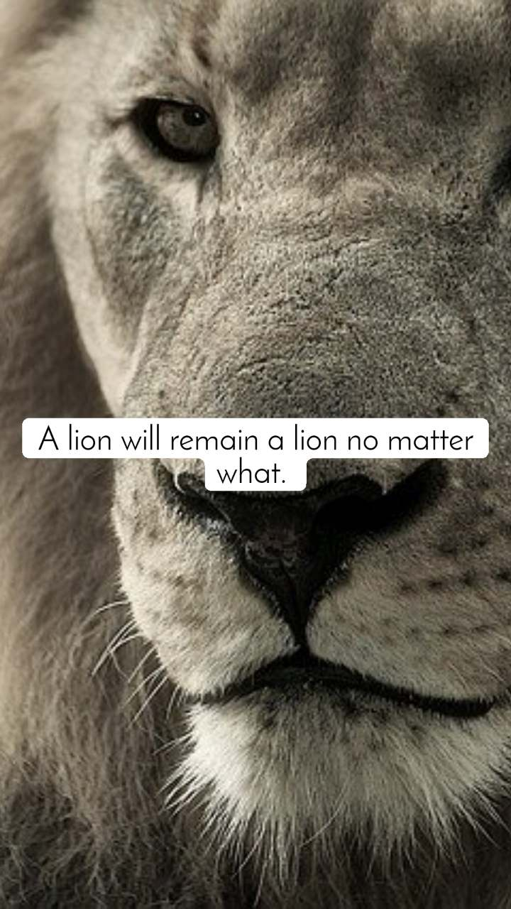 A lion will remain a lion no matter what.