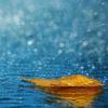 Aashish Kumar Yadav 😕यूं ना देखो इसकदर के,कि कहीं कोई अंजान हूं मैं🙋♂️ ⏳वक़्त के साथ चलता हुआ,आप जैसा ही इंसान हूं मैं😉