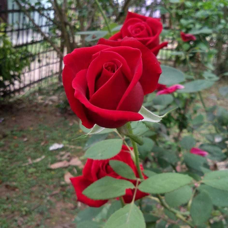 nishi kachari simple living high thinking
