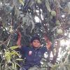 Arvind Thakor