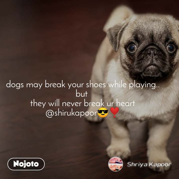 dogs may break your shoes while playing.. but  they will never break ur heart @shirukapoor😎❣️