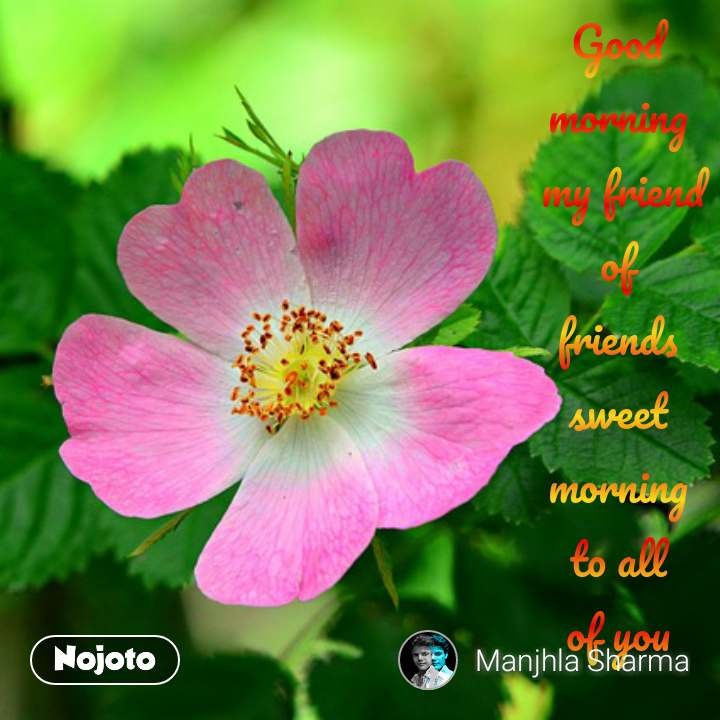 Good Morning My Friend Of Friends Sweet Morni Nojoto