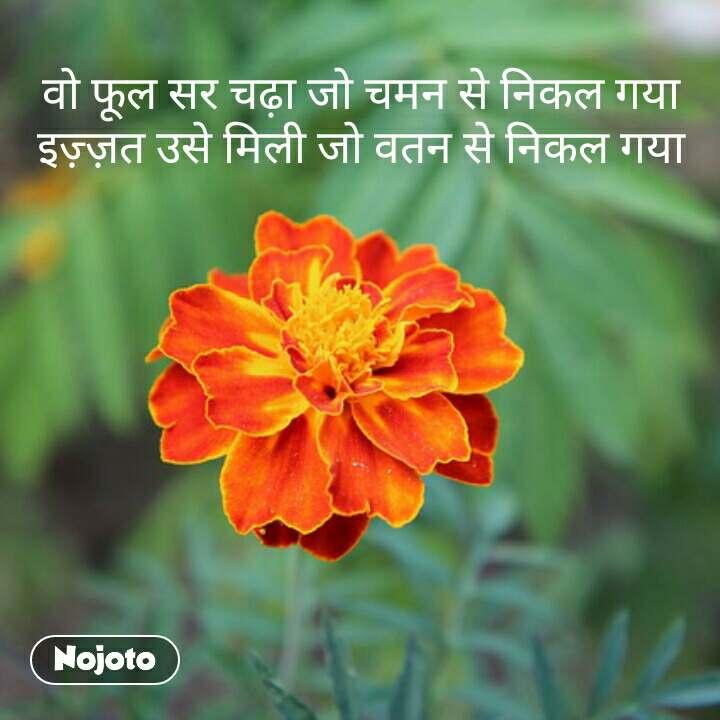 वो फूल सर चढ़ा जो चमन से निकल गया इज़्ज़त उसे मिली जो वतन से निकल गया