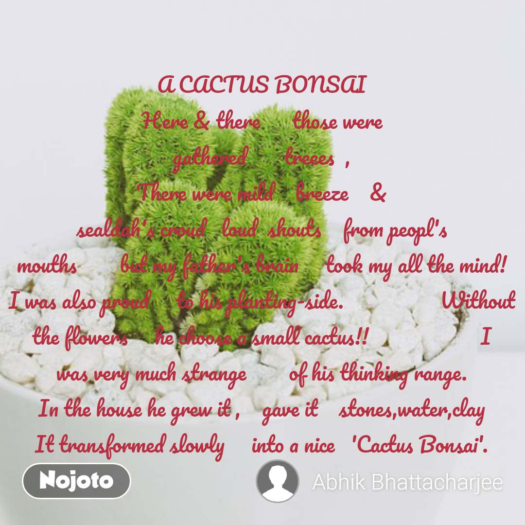 Are Christmas Cactus Poisonous.Latest R Christmas Cactus Poisonous Image And Video Nojoto