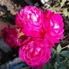 ♥️Rushda Sadaf ♥️ 💓Main ek behad Aam si ladki.. Mera lahza ,,meri baatein bhut hi aam hai lekin.... mein zazbe paak rakhti hu, #mohabbat khas rakhti hu...!!!❤️ #Photographer📸📷 I love #shayri,😍  quotes😍 , and #Dil ki baatein.😍 ..keep #following ..😊
