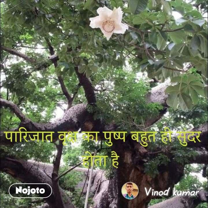 पारिजात वृक्ष का पुष्प बहुत ही सुंदर होता है