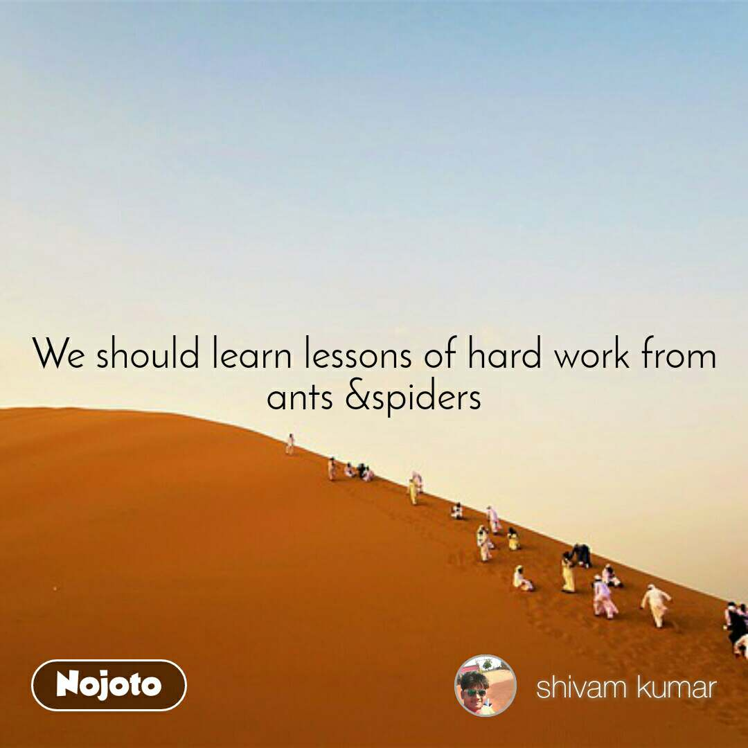 We should learn lessons of hard work from ants &spiders