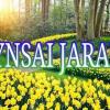 Kynsai jarain Please subscribers https://www.youtube.com/channel/UCln4jirXqMyv6iu6A8xu-Mg