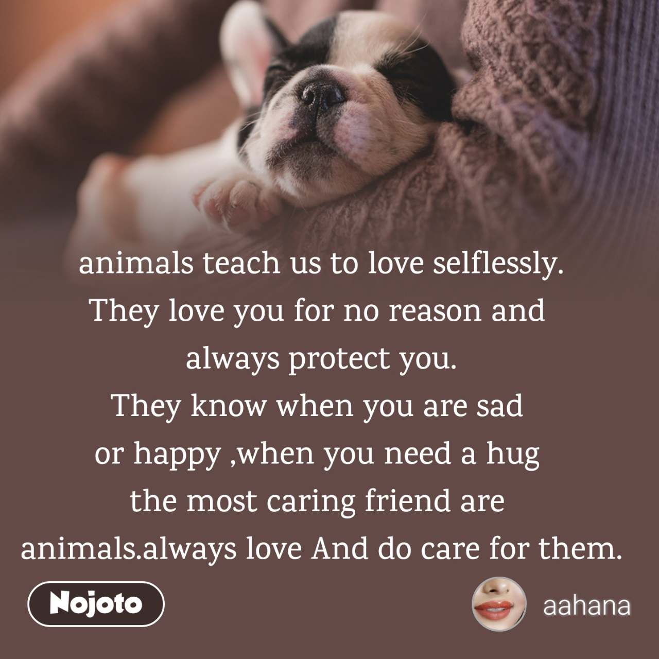 animals teach us to love selflessly. They love you for no reason and  always protect you. They know when you are sad  or happy ,when you need a hug  the most caring friend are  animals.always love And do care for them.