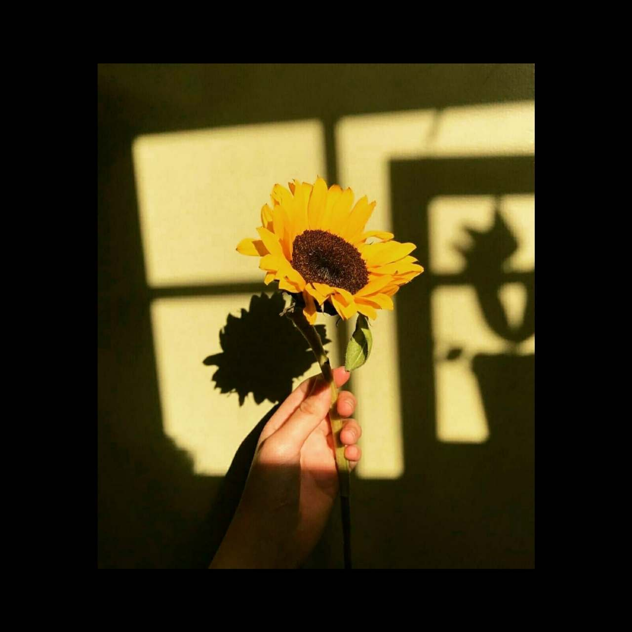 I'll always be a Sunflower for you ! (Read in the
