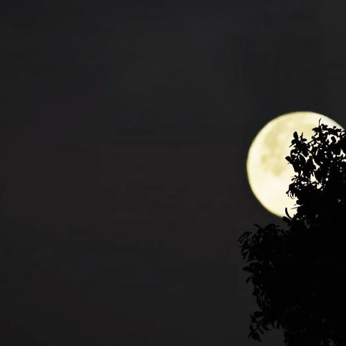 Moon quotes and goodnight shayari