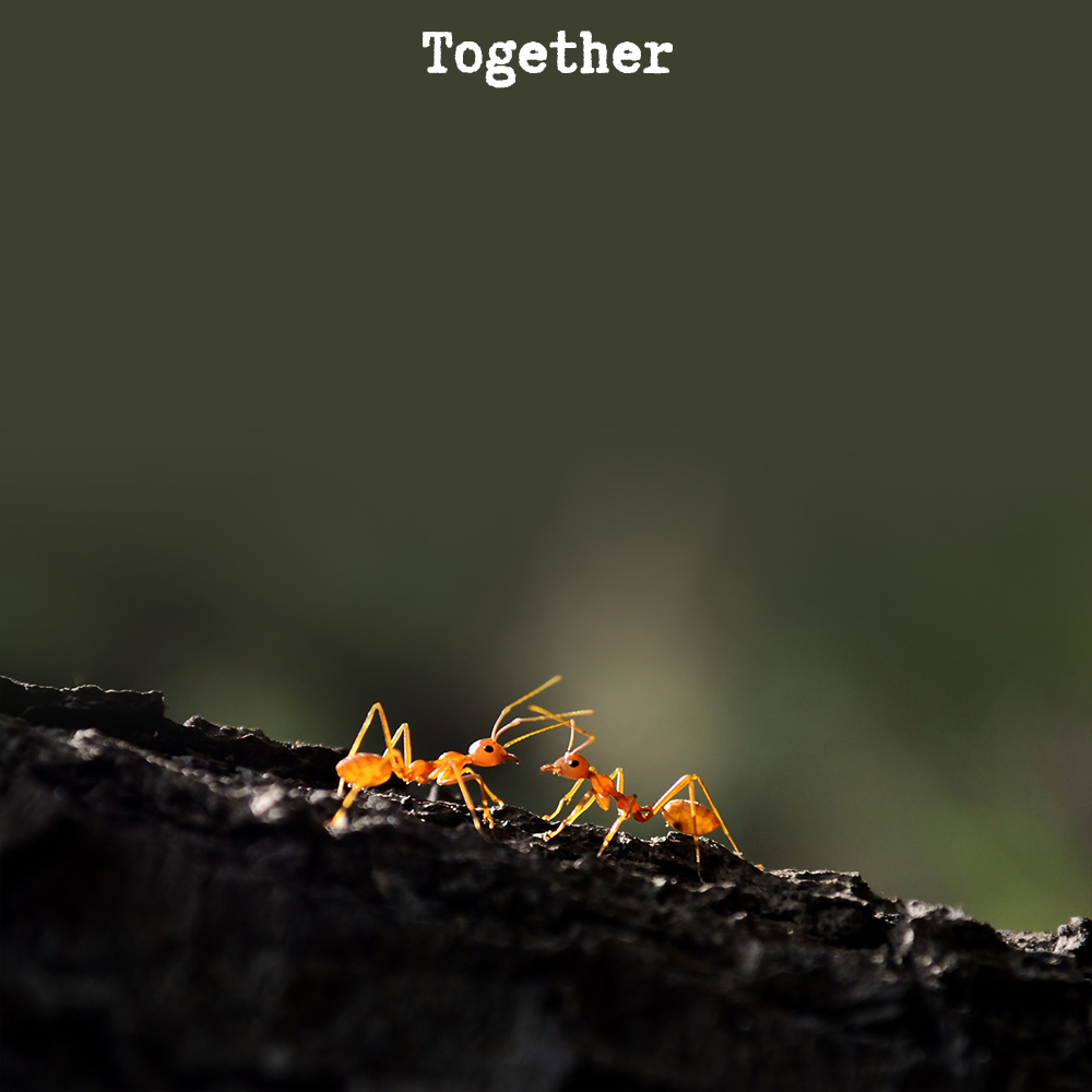 Together Quotation