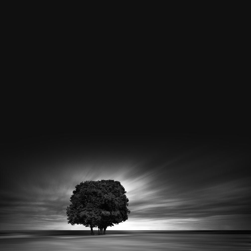 Blak tree Quotes