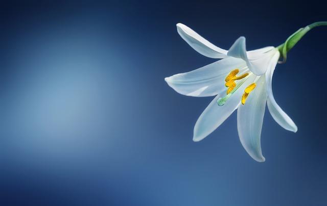 जिस फुल से भी दिल लगाओ यारो,  उस फुल को कभी  मूरझा