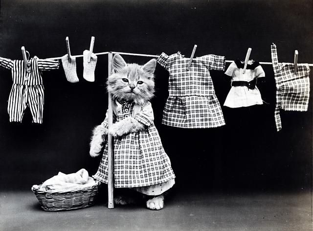 कपड़े सुखाने उसे गिनती के चार थे... सौ बार छत पे आ