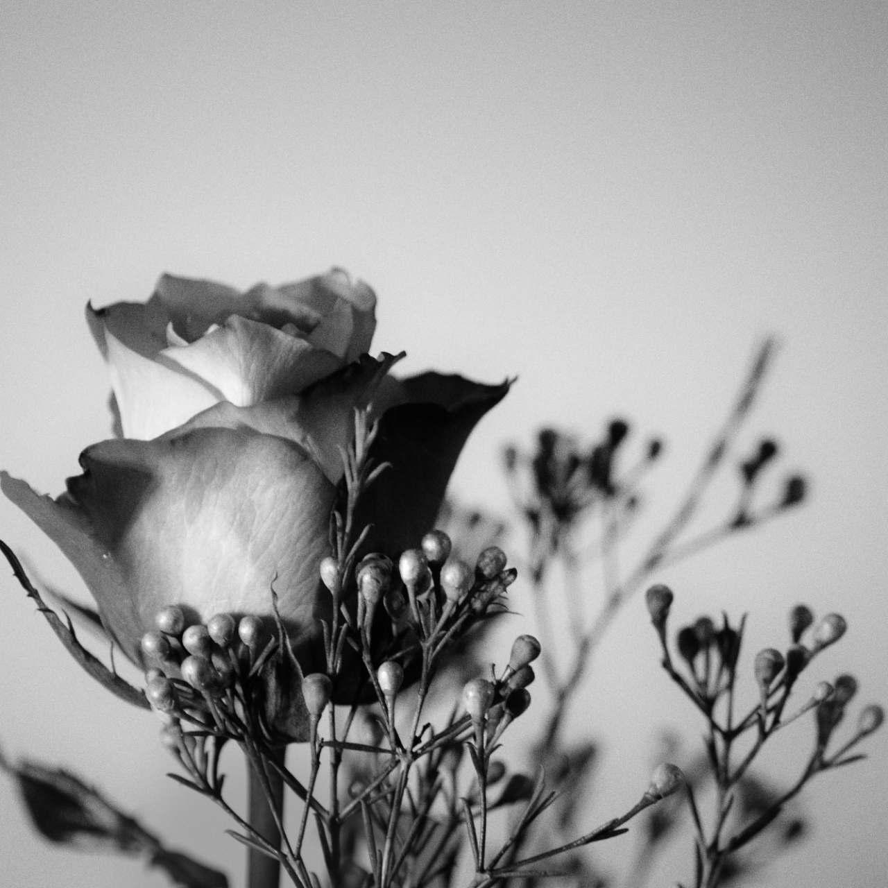 इश्क़ और गुलाब का Connection हैं ऐसा  दवा और दारु