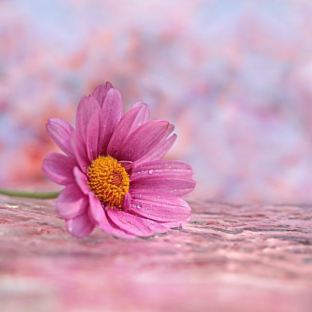 तेरी मोहब्बत मत व्यथित हो फूल किसको सुख दिया संसार