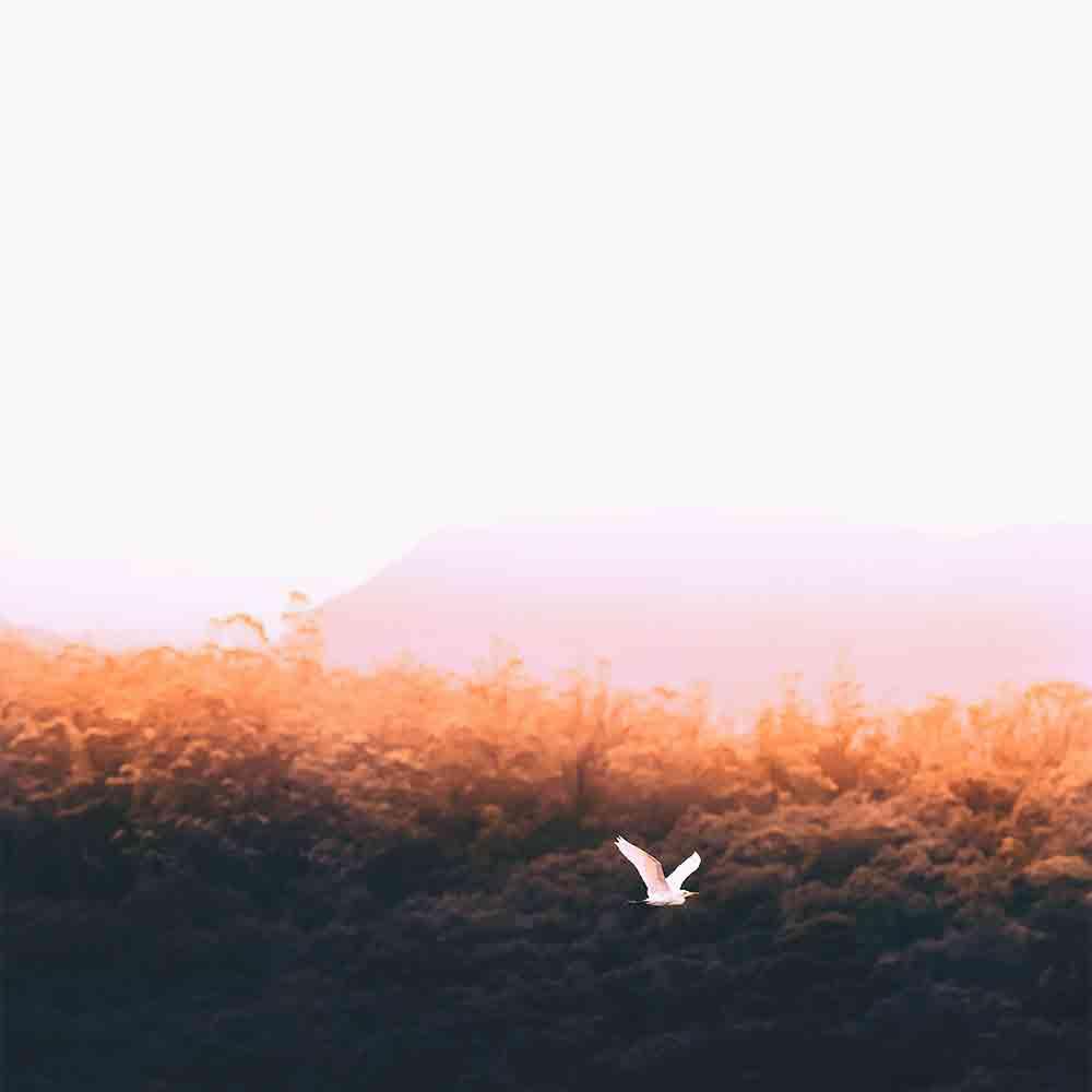 Bird shayari