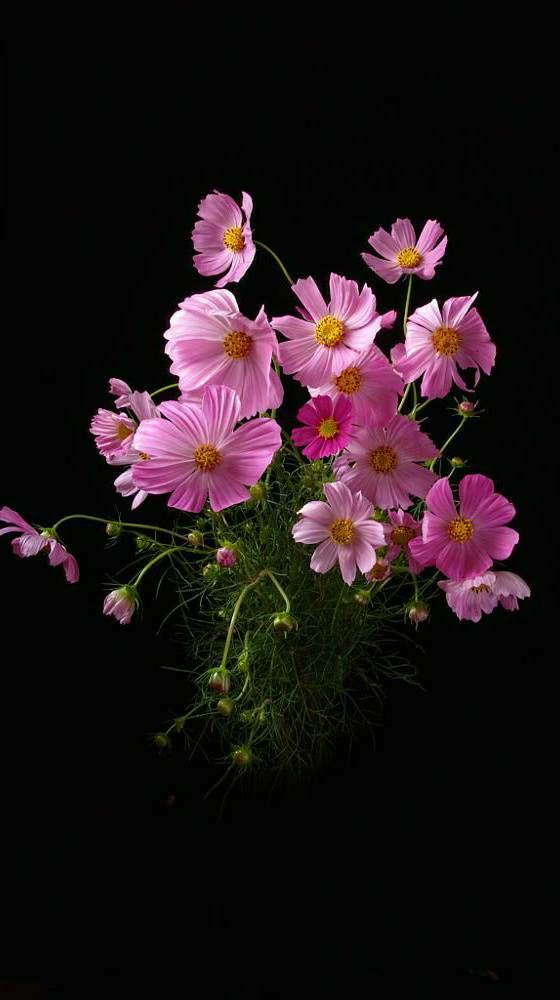 आ गये तुम क्यों चमन में बेनक़ाब, उड़ गई फूलों के र