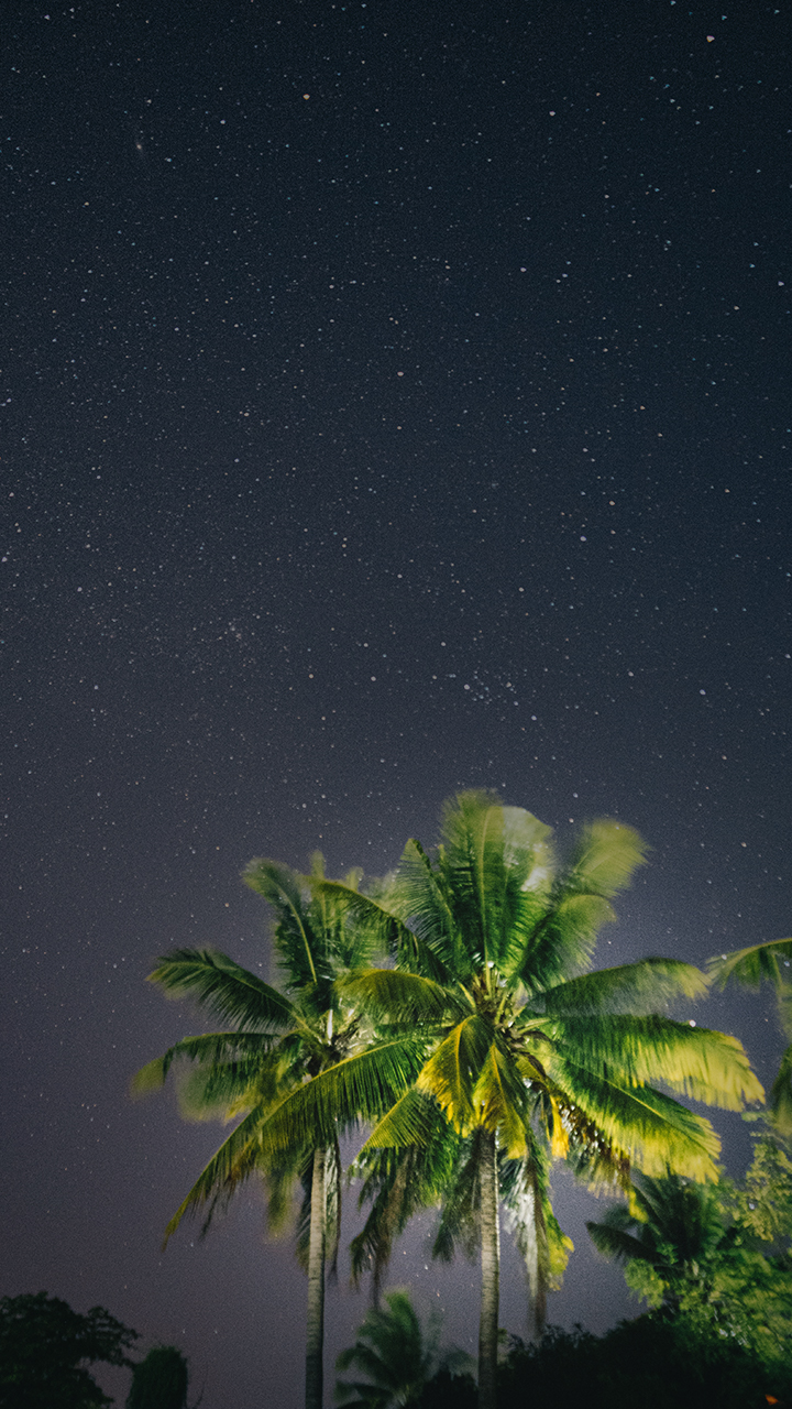 StarsthroughTree