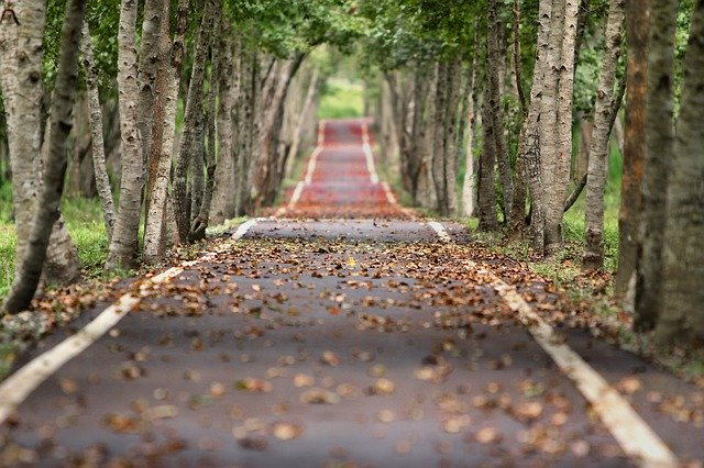 A walk on road  with leaves here and there, as I s