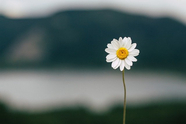 A flower cannot bloom in the garden of overthinkin
